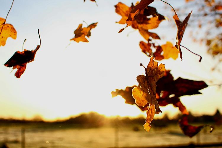 Feuilles durant l'automne